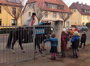 Pferd am Zaun